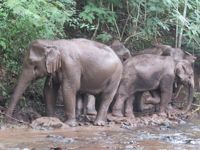 Elephant encounter in Thailand. Photo: Bianca Caruana
