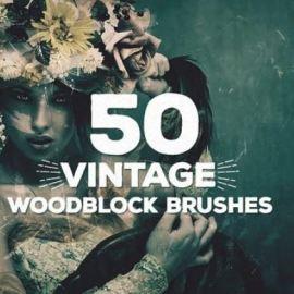 Envato Brush Collection Jan  2021 Free Download (premium)