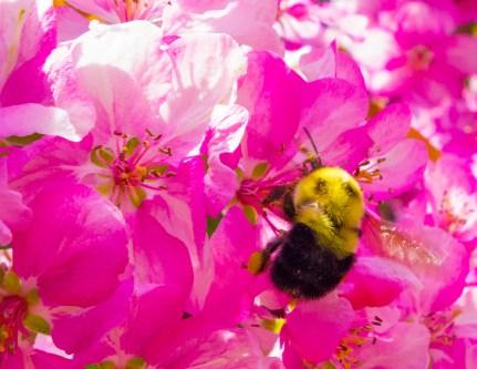 4. bee