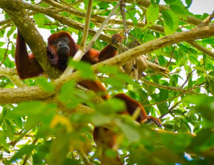 8. monkey