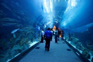 Dubaï Aquarium