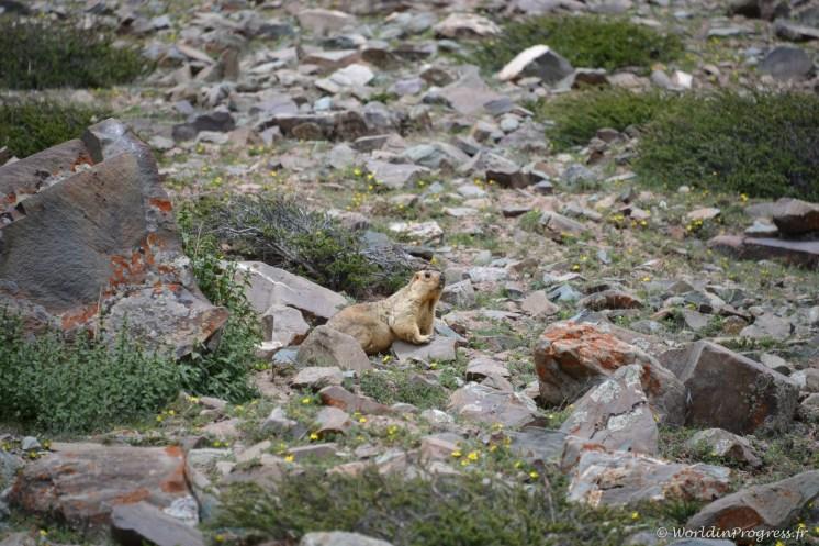 2014-08-02 11-36-37 Ladakh Stok Kangri 6000m
