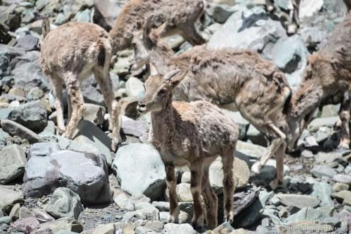 2014-08-04 11-50-21 Ladakh Stok Kangri 6000m