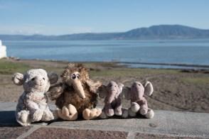 Nos mascottes avec Boo, le kiwi voyageur