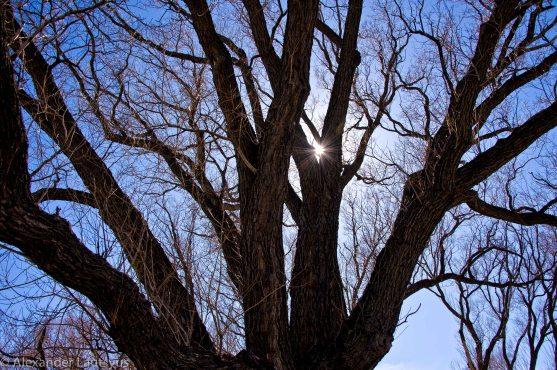 """Солнце сквозь """"листву"""" озаряет лица..."""