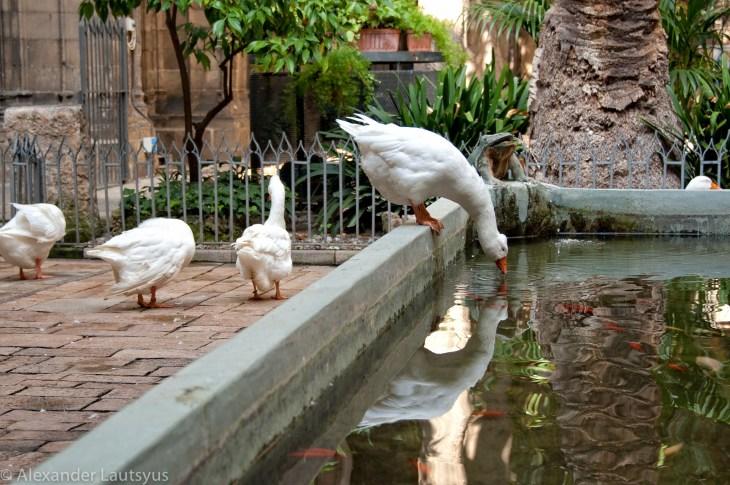 Монастырские гуси