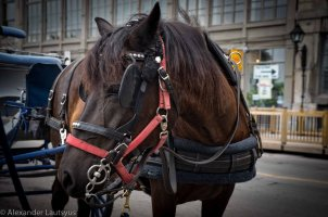 Montreal Horse riding attraction