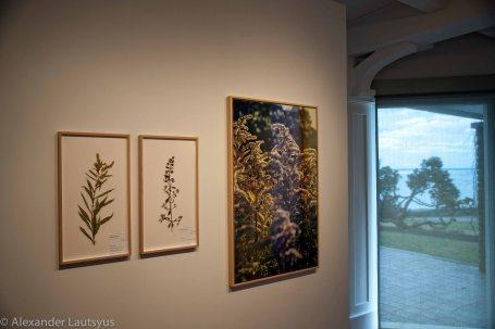 Corin Sworn exhibition in Gallery Park