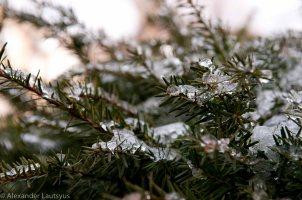 March freezing rain