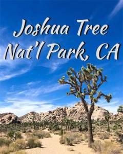 Joshua-Tree-Natl-Park-Icon_3