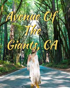 Avenue-of-the-Giants-Icon__2