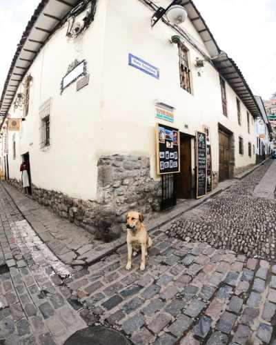 Stray Dog in narrow street of Cusco Peru