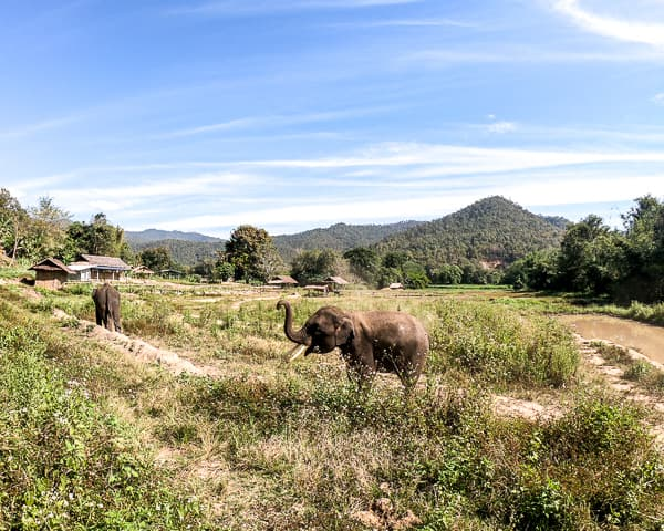Budget Friendly things to do in Chiang Mai: Elephant Sanctuary