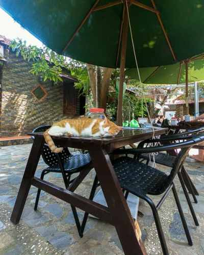 Best Places to eat in Hoi An: Jacks Cat Cafe