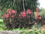 Melbourne Royal Botanical Gardens foliage