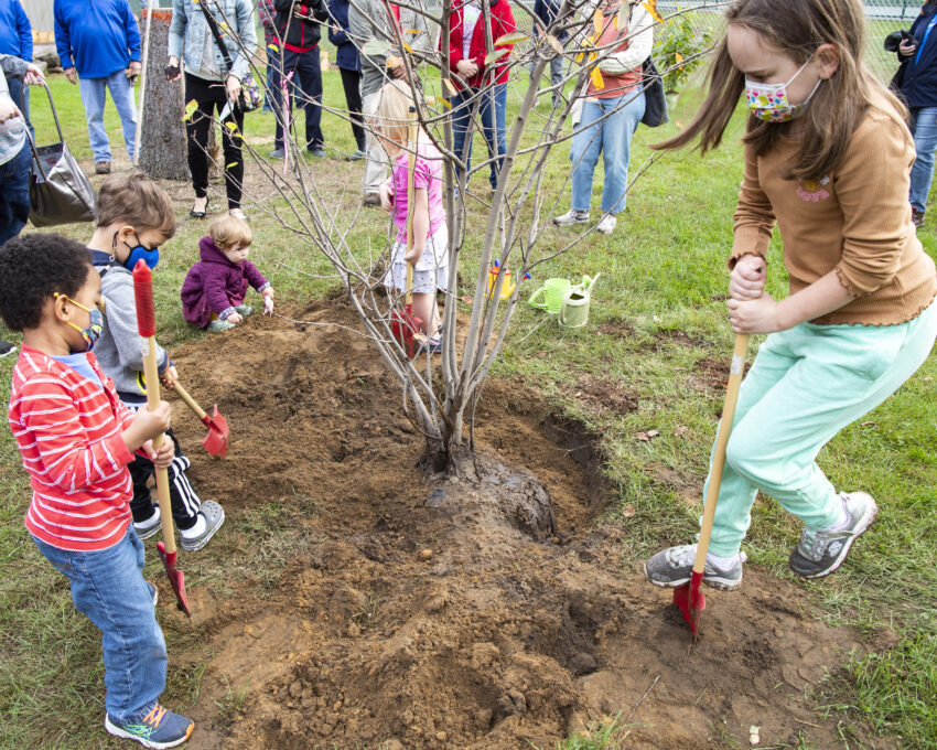 Little Diggers help tree-planting project