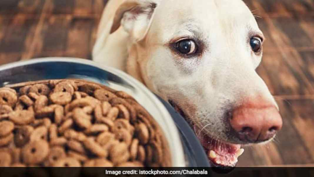 Video Of Dog Stealing Food From Kitchen Counter Goes Viral, Internet Shares Relatable Stories