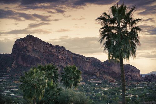 Camelback Mountain and Palm Tree