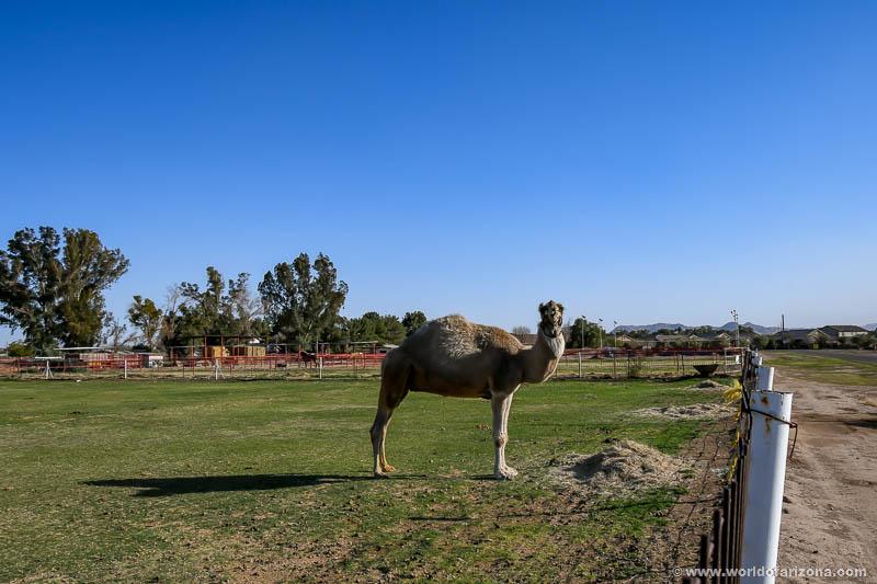 Ellsworth Suburban Mini Farms | Neighborhood In Queen Creek, AZ
