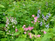 Red campion and blubells (as seen in Stef's May Flowers post)