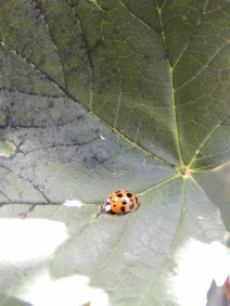 A Lady Bird. Copyright Stephanie Woods
