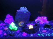 Glow in the dark rocks, Treasures of the Earth, Corpach