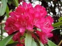 Flowers, Balgay Park