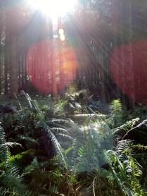 Woodlands, Falkland