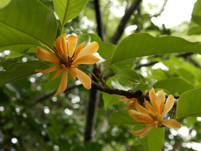 Moss Flowering Plants