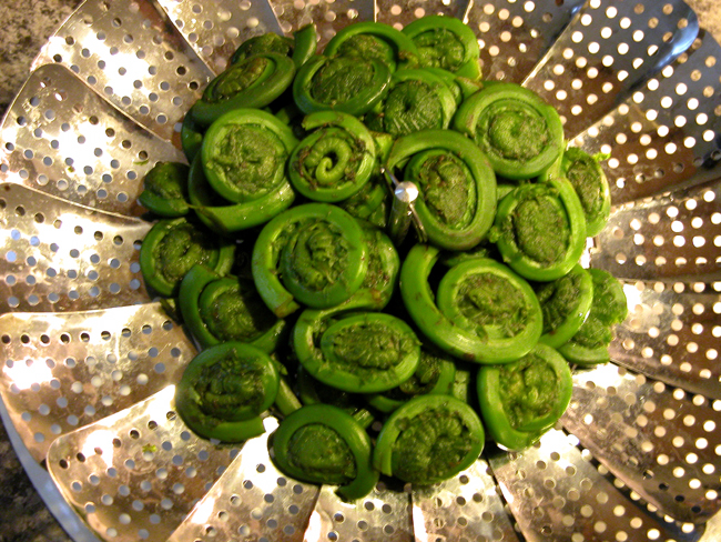 Fresh fiddleheads from the woods behind my house...mmmm.
