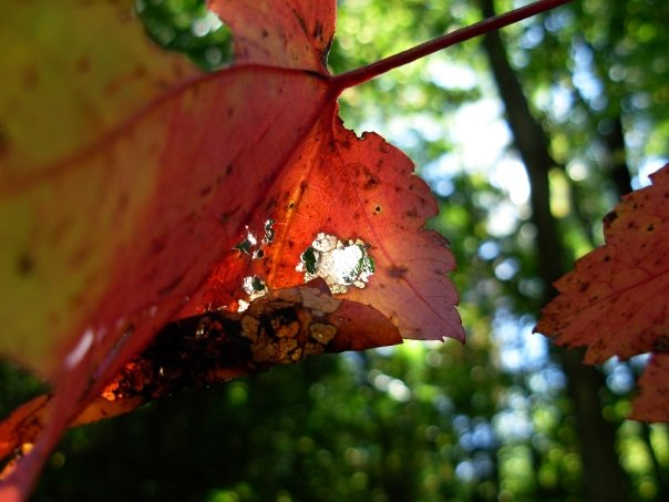 2009-SEPT26-autumn leavesjpg