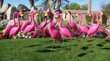 Pink-flamingo1