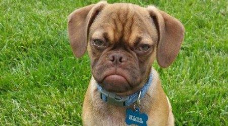 Grumpy-Earl1