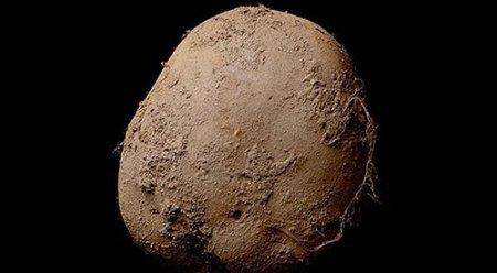 Abosch-potato