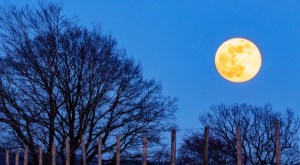 Super moon or Pink moon, you can watch the super moon naked eye
