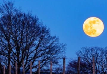 Super moon or Pink moon