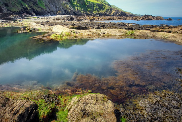 Seaweeds are important source of