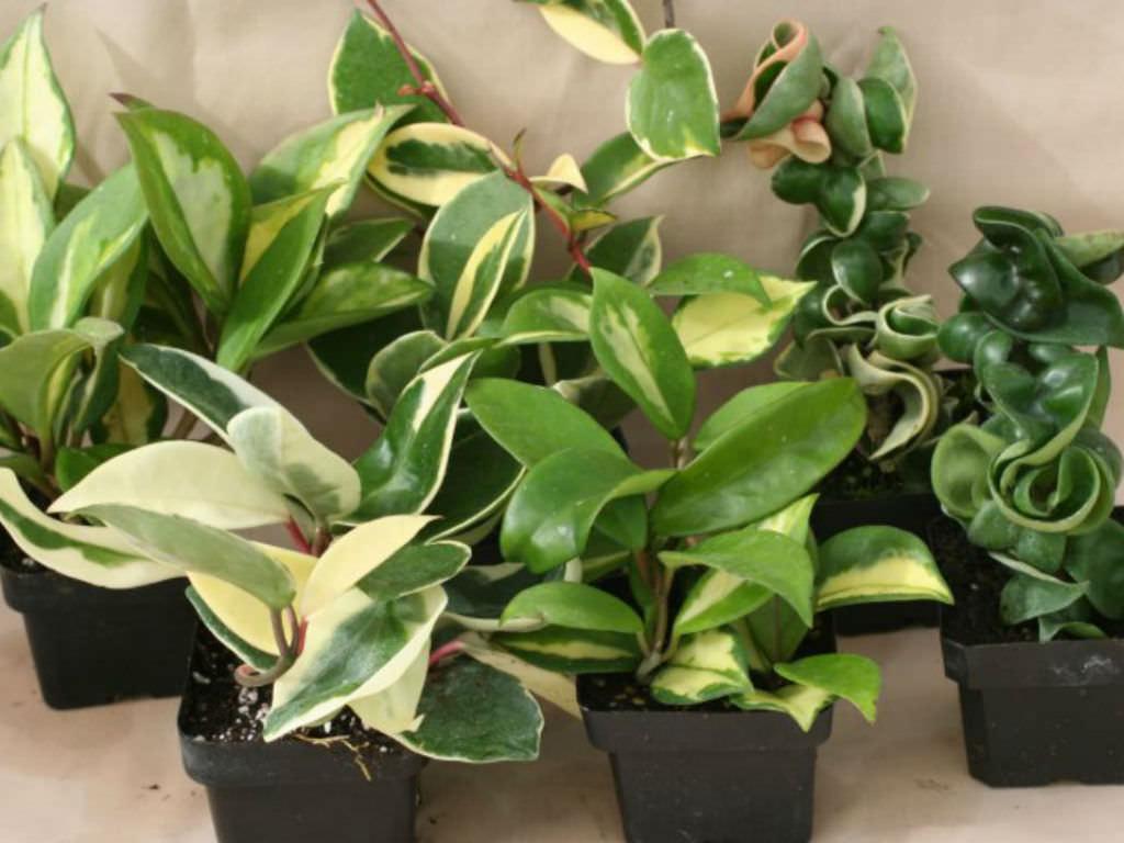 Easiest Indoor Plants