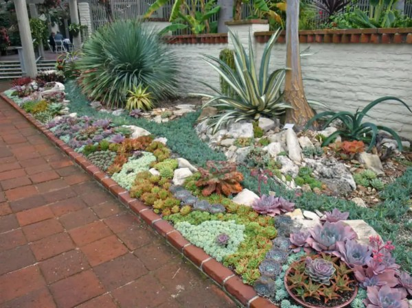 plant outdoor succulent