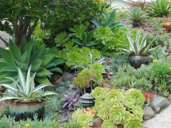 guide creating succulent