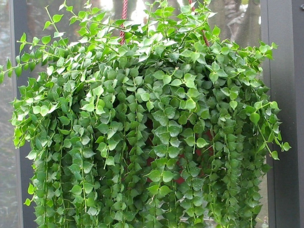Hanging Plant Baskets Outdoor