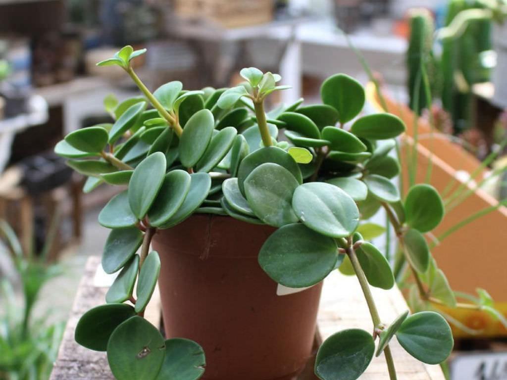 Succulent Plants Images