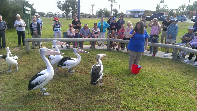 kalbarri, kalbarri with kids, Kalbarri for Kids, family travel Kalbarri, Feeding Pelicans Kalbarri, best things to do with kids Kalbarri & WA Midwest, Kalbarri Family Travel, Kalbarri with Kids