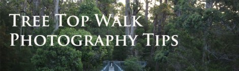 Tree Top Walk Photography Tips