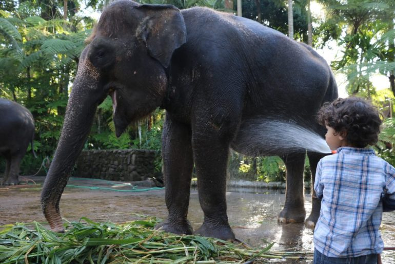 Incredible Family Travel Experiences - Best of 2016 elephants bali
