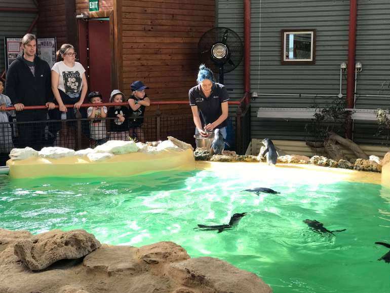 A Day Visit To Penguin Island, Western Australia