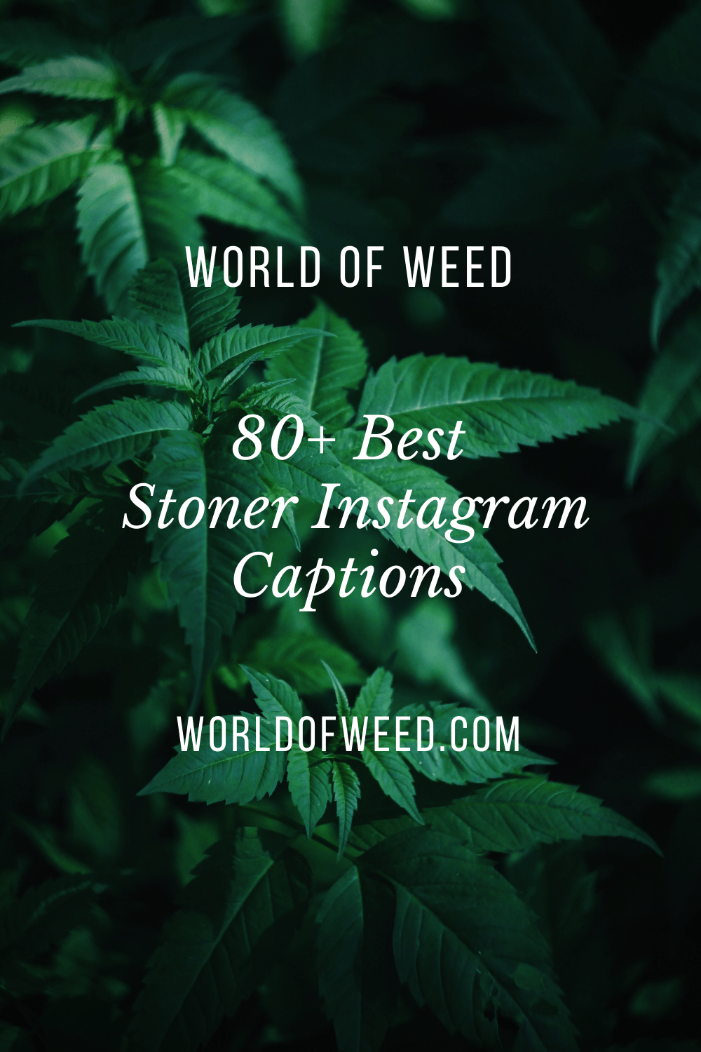 Stoner Quotes For Instagram : stoner, quotes, instagram, Stoner, Instagram, Captions, World