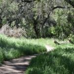 Bending trail12
