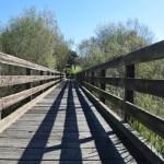 Bridge over a stream12