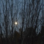 Moon behind the branches12
